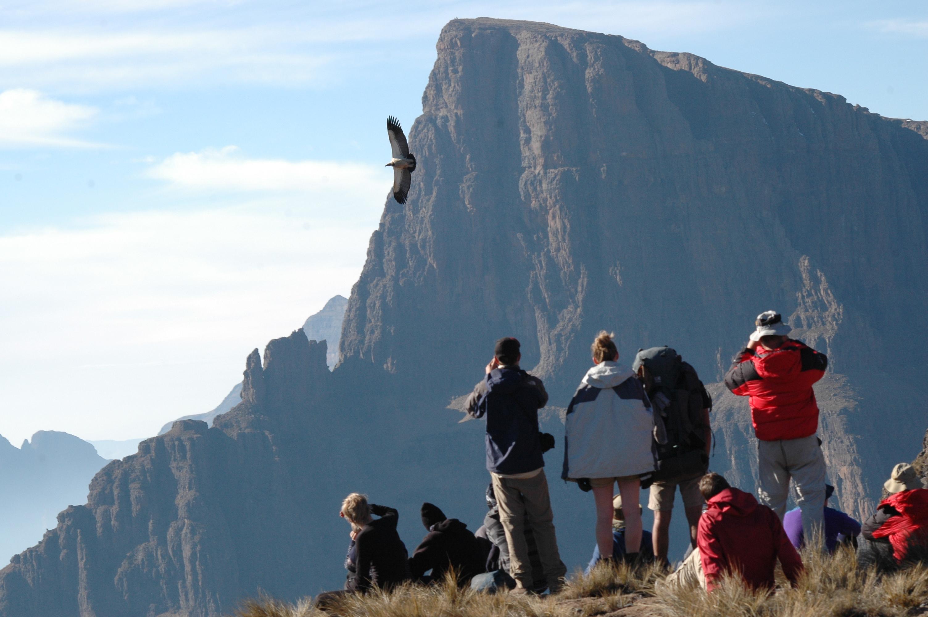sighting-of-lammergeier-gys-drakensberg-traverse